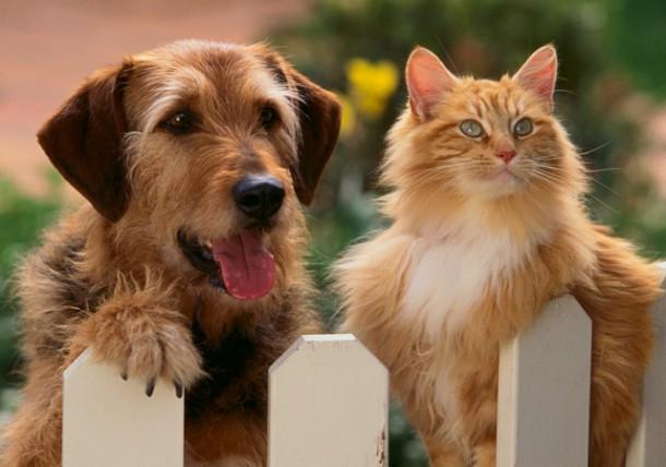 Best Pets Shop