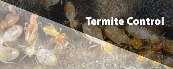 termite removal service