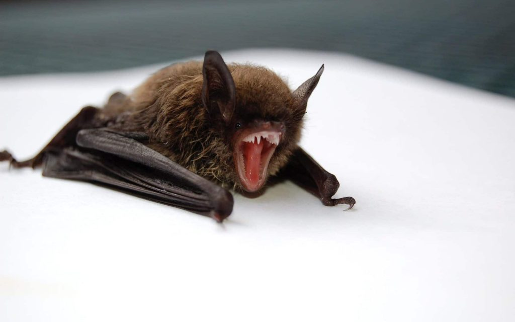 bat control provider